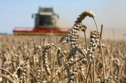 Стимулирование сельскохозяйственного сектора
