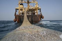 Налоги для рыболовецких предприятий