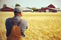 Выбор главы фермерского хозяйства